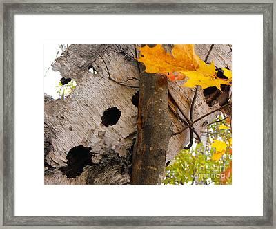 Leaning Birch Framed Print