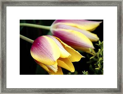 Leaning From The Dew Framed Print by Jenny Hudson