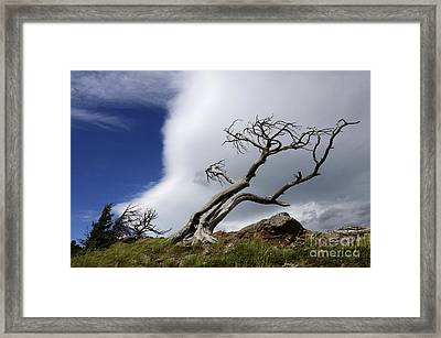 Leaning Just A Little Framed Print by Bob Christopher