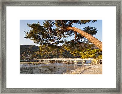 Leaning Pine Tree Arashiyama Kyoto Japan Framed Print by Colin and Linda McKie
