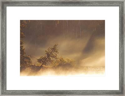 Leaning Tree In Swirling Fog Framed Print by Larry Ricker