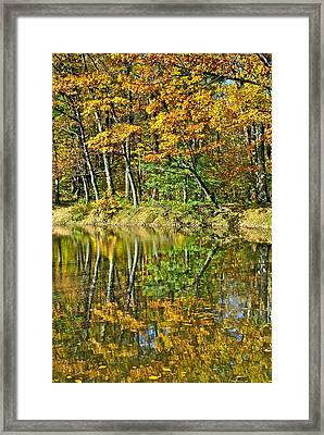 Leaning Trees Framed Print by Frozen in Time Fine Art Photography