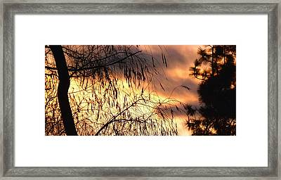 Leaning Willow Silhouette Framed Print by Will Borden