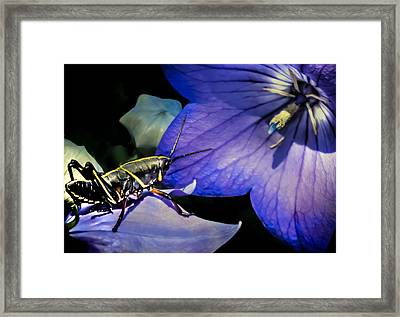 Contemplation Of A Pistil Framed Print by Karen Wiles