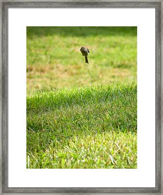 Leaping Bird Framed Print