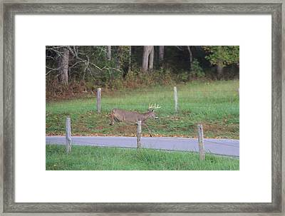 Leaping Buck In Cades Cove Framed Print by Dan Sproul