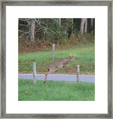 Leaping Buck In Smoky Mountains Framed Print by Dan Sproul
