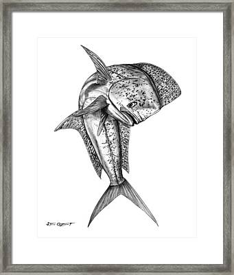 Leaping Dolphin  Framed Print