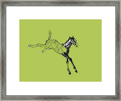 Leaping Foal Framed Print