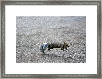 Framed Print featuring the photograph Leaping Squirrel by Lorna Rogers Photography