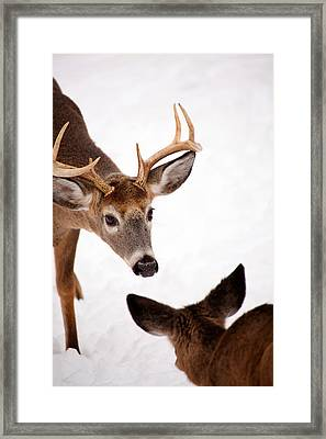 Learning A Lesson Framed Print by Karol Livote