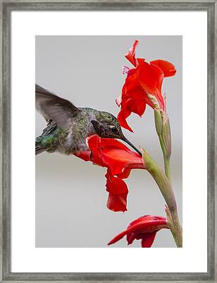 Learning About Flowers Framed Print by Angie Vogel