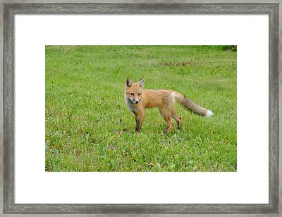 Learning Lessons Of Life Framed Print by Sandra Updyke
