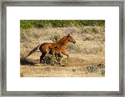 Learning To Run Framed Print by Mike  Dawson
