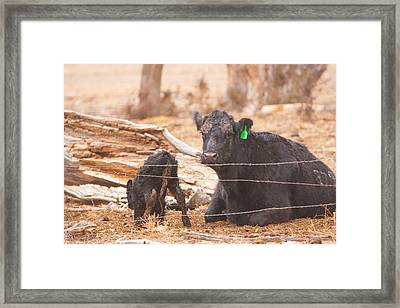 Learning To Stand On Your Own Framed Print by Shirley Heier