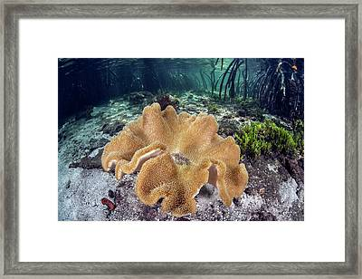 Leather Coral Framed Print by Ethan Daniels