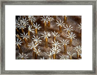 Leather Coral Polyps Framed Print by Ethan Daniels