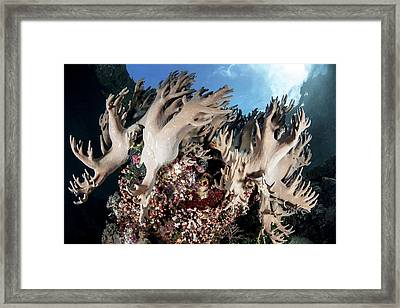 Leather Corals Framed Print