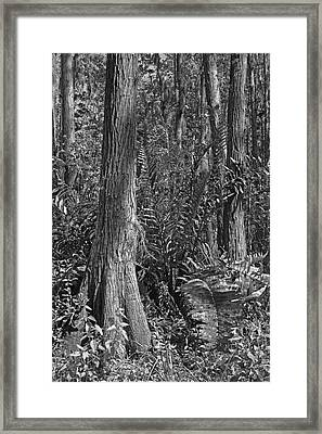 Leather Fern. Shingle Creek Basin. Framed Print