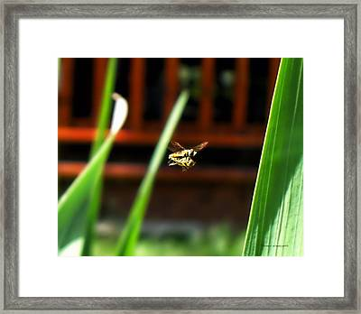 Framed Print featuring the photograph Leave No Bee Behind by Thomas Woolworth