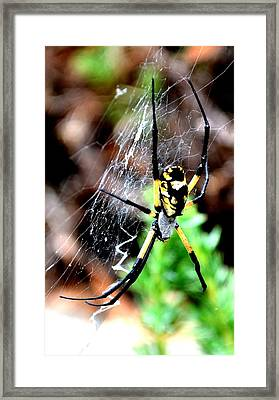 Leave The Writing To The Spider  Framed Print