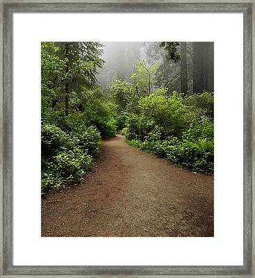 Leave Your Cares Behind Framed Print by Phyllis Fitzsimons