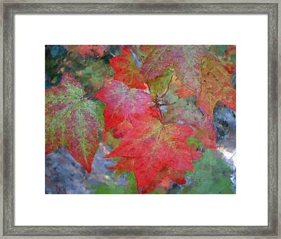 Leaves 2 Framed Print