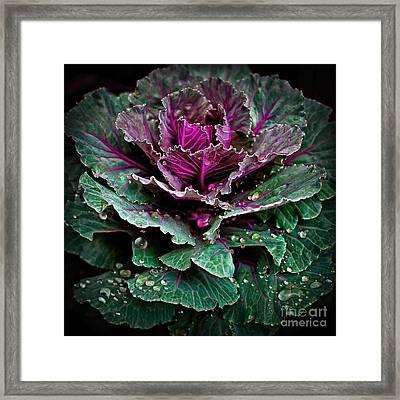 Decorative Cabbage After Rain Photograph Framed Print by Walt Foegelle