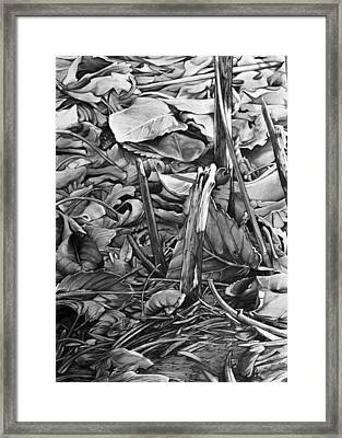 Leaves Framed Print by Aaron Spong