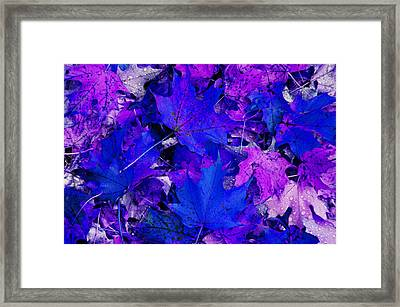 Leaves Framed Print by Aimee L Maher Photography and Art Visit ALMGallerydotcom