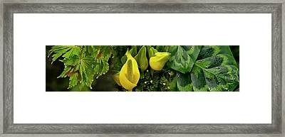 Leaves And Flowers Framed Print by Panoramic Images