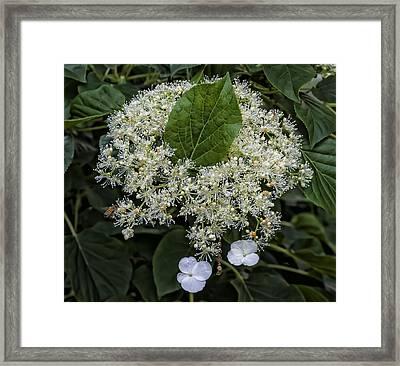 Leaves And Flowers Framed Print by Robert Ullmann