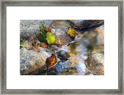 Leaves And Needles Framed Print