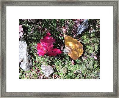 Leaves And Shadows Framed Print by Linda Marcille
