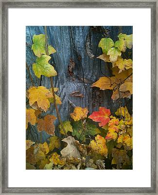 Leaves And Shed Framed Print by Charles Morford