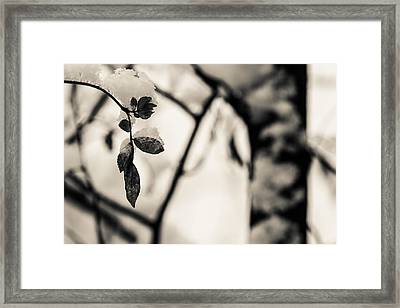 Leaves And Snow Framed Print by Andreas Levi