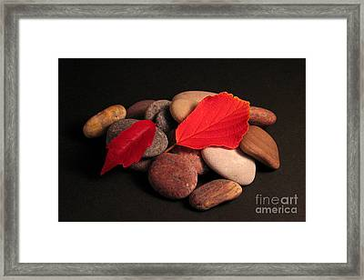 Leaves And Stones Framed Print