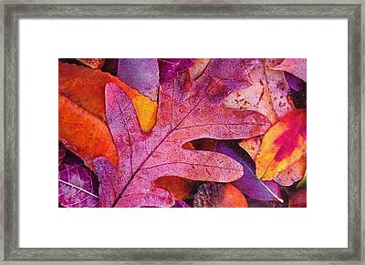 Leaves Framed Print by Anne-Elizabeth Whiteway