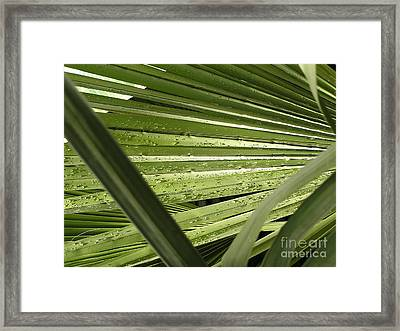 Leaves At Garfield Park Framed Print
