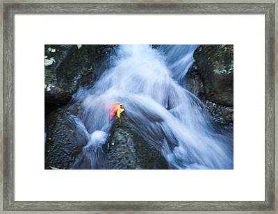 Framed Print featuring the photograph Leaves by Cathy Donohoue