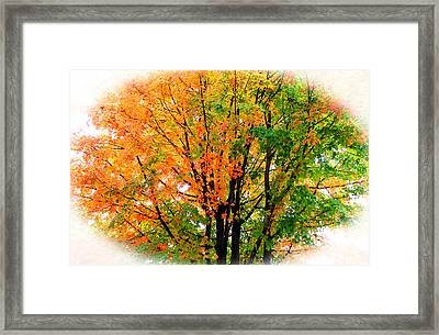 Leaves Changing Colors Framed Print by Cynthia Guinn