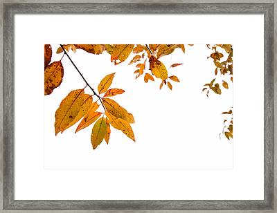Leaves Changing Framed Print by Karol Livote