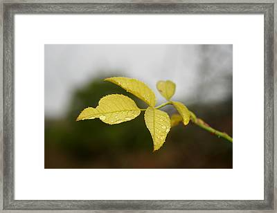 Leaves Framed Print by Cora Brum
