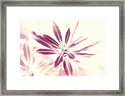 Leaves Dancing In The Sunlight Abstract Framed Print by Natalie Kinnear