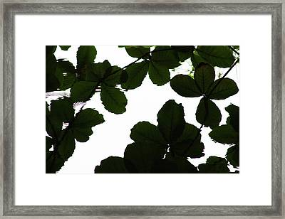 Leaves Drifting Framed Print by James Knight