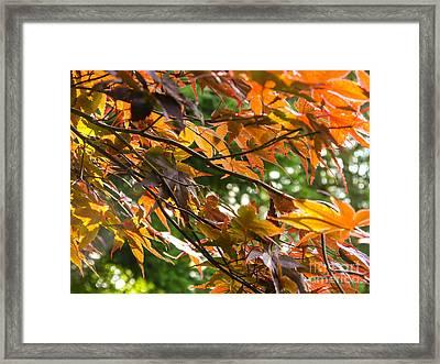 Leaves Framed Print by Ernest Puglisi