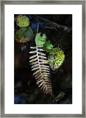 Leaves Float In A Stream  Elsie Framed Print