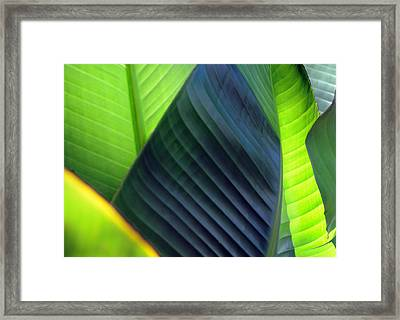 Framed Print featuring the photograph Leaves - Green by Haleh Mahbod