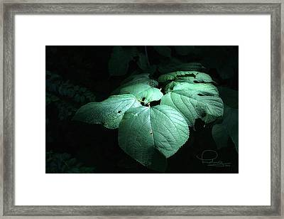 Framed Print featuring the photograph Leaves In A Patch Of Sunlight by Ludwig Keck