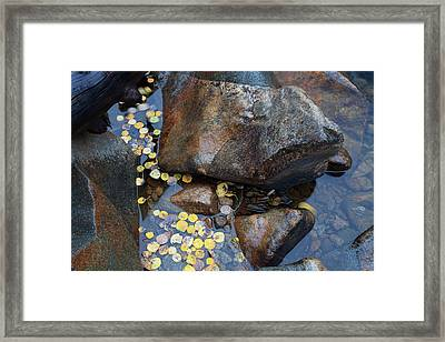 Leaves In A Stream Framed Print by Jim Garrison